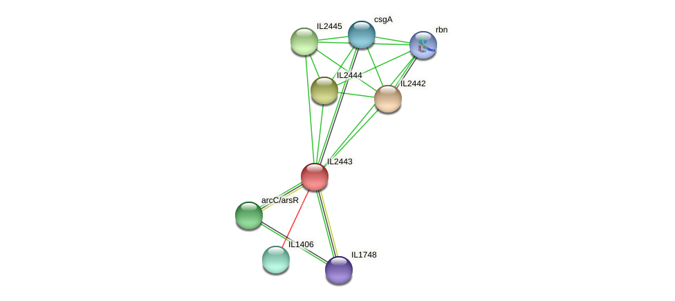 IL2443 protein (Idiomarina loihiensis) - STRING interaction network