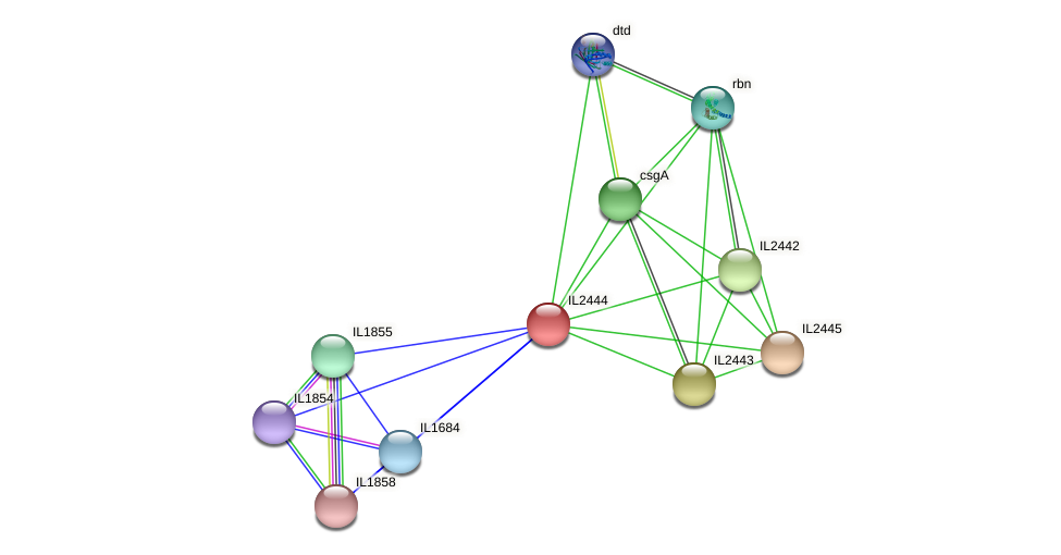 IL2444 protein (Idiomarina loihiensis) - STRING interaction network
