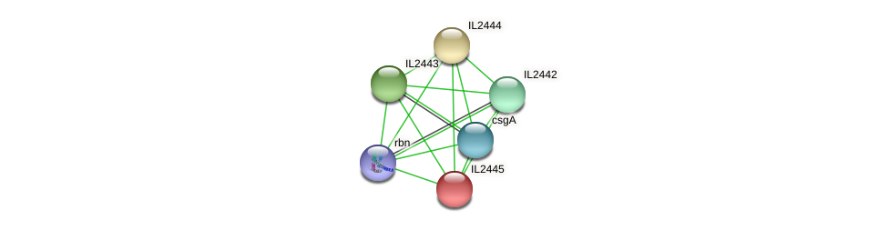 IL2445 protein (Idiomarina loihiensis) - STRING interaction network