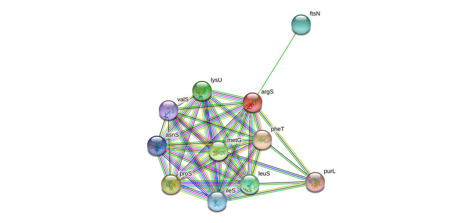 argS protein (Idiomarina loihiensis) - STRING interaction network