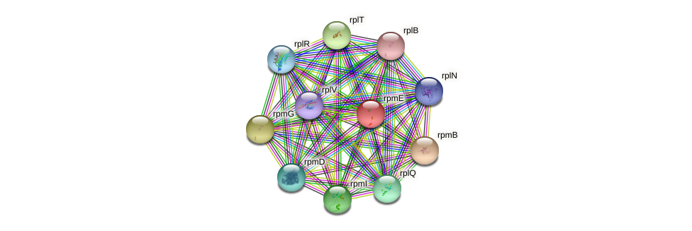 rpmE protein (Idiomarina loihiensis) - STRING interaction network