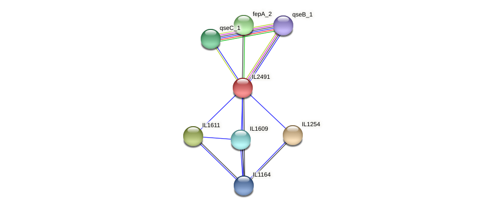 IL2491 protein (Idiomarina loihiensis) - STRING interaction network
