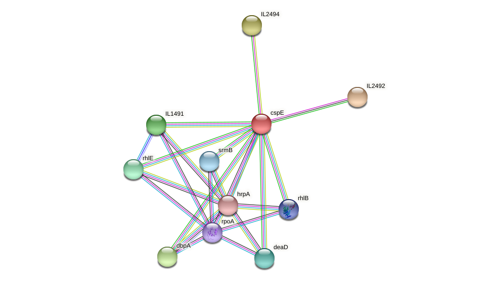 cspE protein (Idiomarina loihiensis) - STRING interaction network
