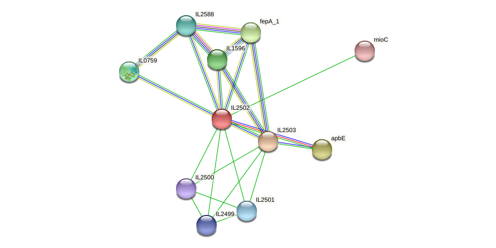 IL2502 protein (Idiomarina loihiensis) - STRING interaction network
