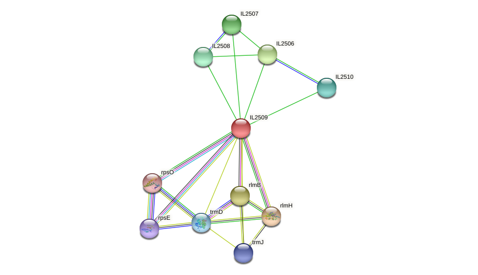 IL2509 protein (Idiomarina loihiensis) - STRING interaction network