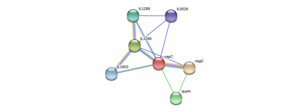 vapC protein (Idiomarina loihiensis) - STRING interaction network