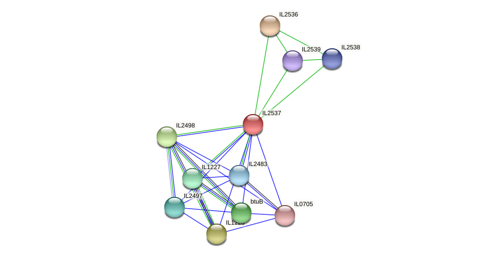 IL2537 protein (Idiomarina loihiensis) - STRING interaction network