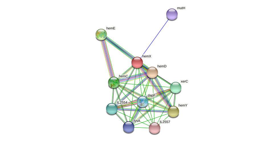 hemX protein (Idiomarina loihiensis) - STRING interaction network
