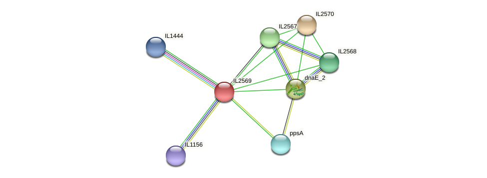 IL2569 protein (Idiomarina loihiensis) - STRING interaction network