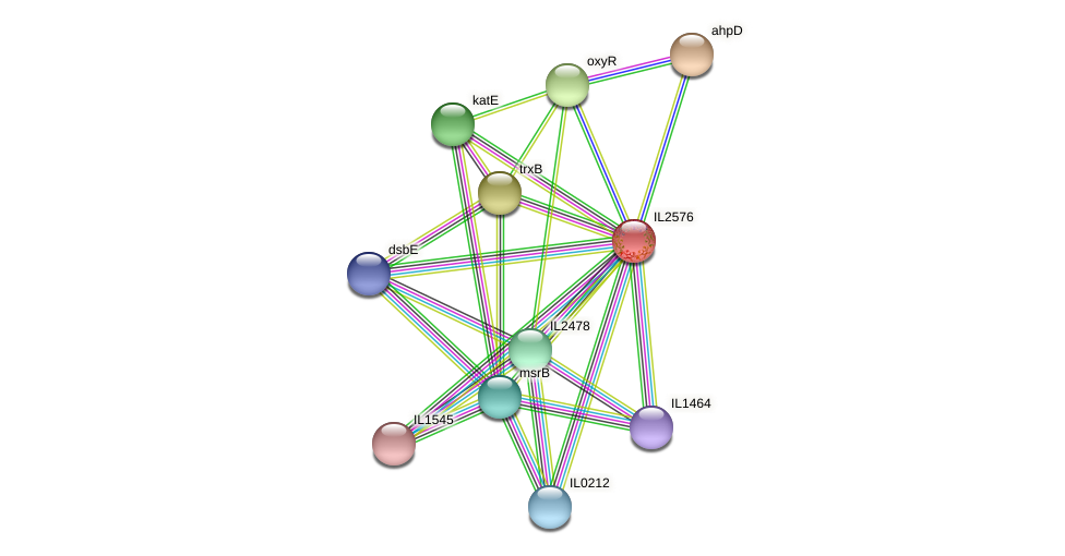 IL2576 protein (Idiomarina loihiensis) - STRING interaction network