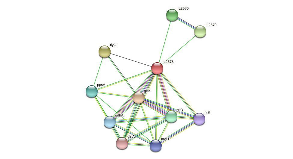 IL2578 protein (Idiomarina loihiensis) - STRING interaction network