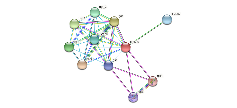 IL2586 protein (Idiomarina loihiensis) - STRING interaction network