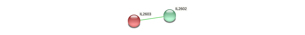 IL2603 protein (Idiomarina loihiensis) - STRING interaction network