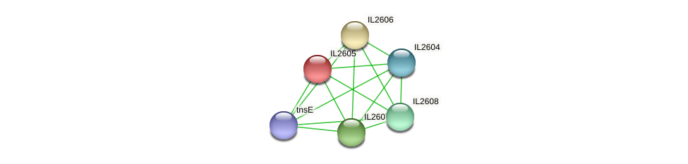 IL2605 protein (Idiomarina loihiensis) - STRING interaction network