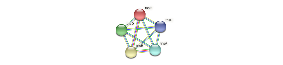 tnsC protein (Idiomarina loihiensis) - STRING interaction network
