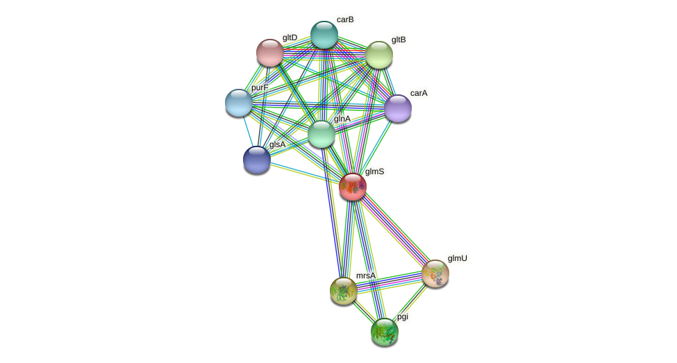glmS protein (Idiomarina loihiensis) - STRING interaction network