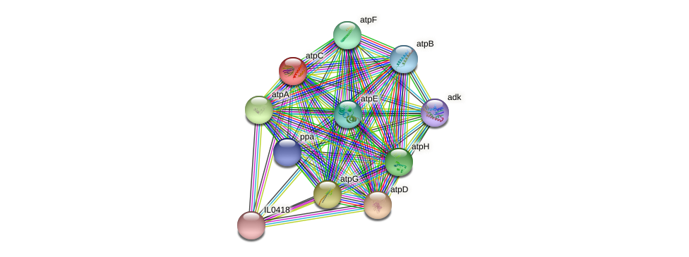 atpC protein (Idiomarina loihiensis) - STRING interaction network