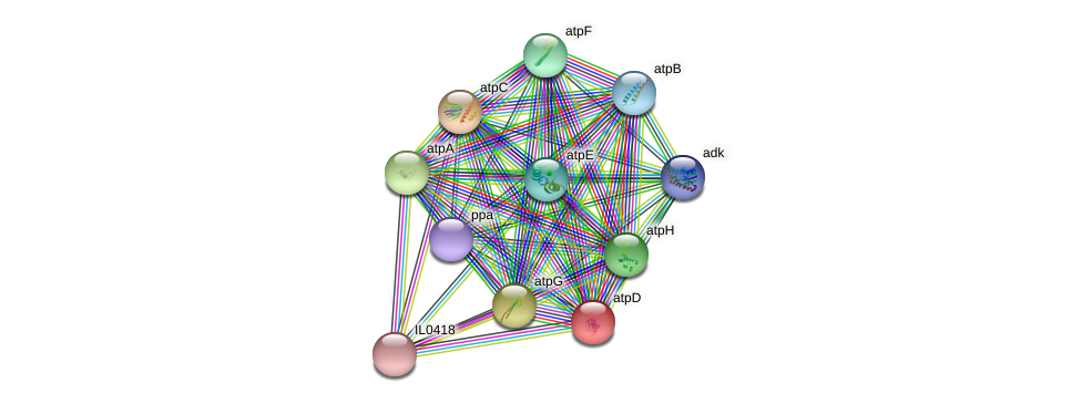atpD protein (Idiomarina loihiensis) - STRING interaction network
