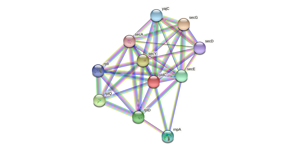 yidC protein (Idiomarina loihiensis) - STRING interaction network
