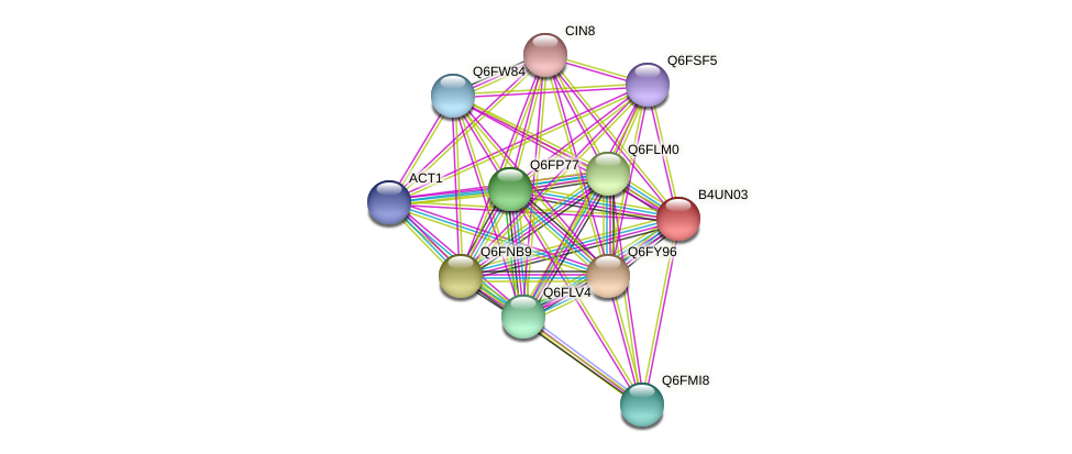 XP_002999546.1 protein (Candida glabrata) - STRING interaction network