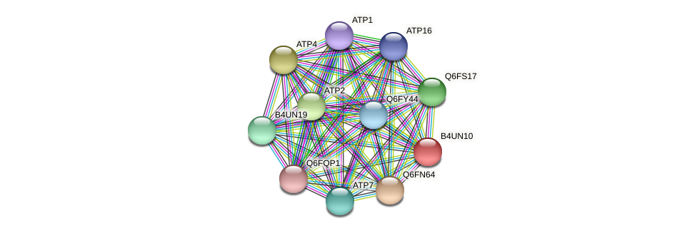 XP_002999553.1 protein (Candida glabrata) - STRING interaction network