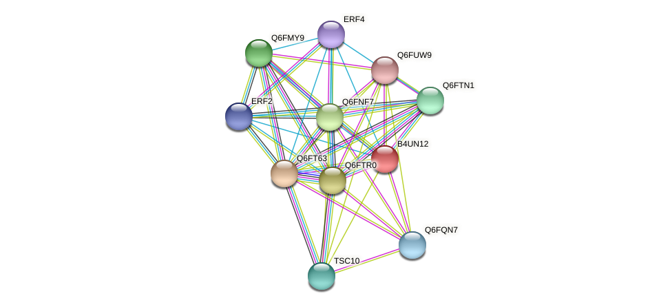 XP_002999555.1 protein (Candida glabrata) - STRING interaction network