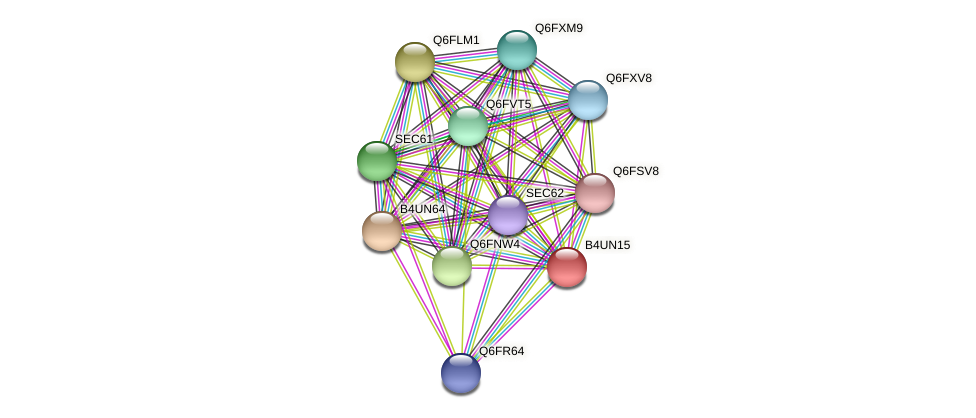 XP_002999558.1 protein (Candida glabrata) - STRING interaction network