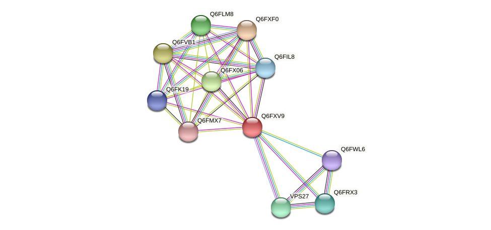 XP_444780.1 protein (Candida glabrata) - STRING interaction network