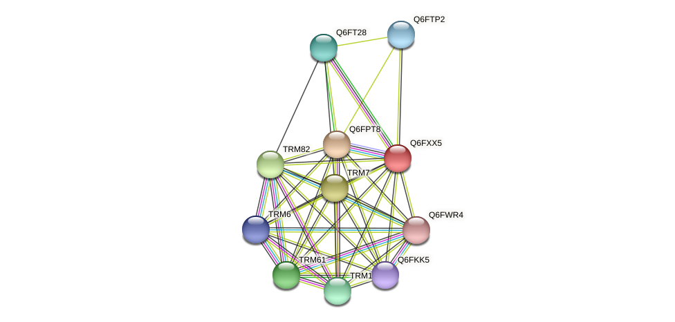 XP_444807.1 protein (Candida glabrata) - STRING interaction network