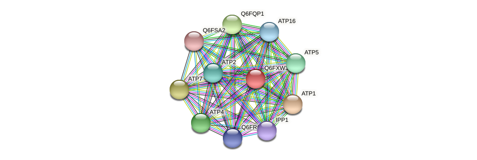 XP_444819.1 protein (Candida glabrata) - STRING interaction network