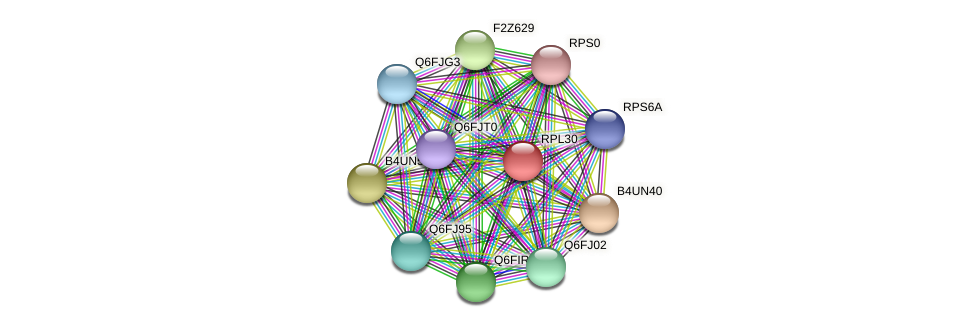 RPL30 protein (Candida glabrata) - STRING interaction network