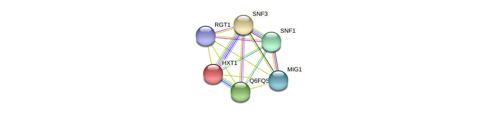 XP_444844.1 protein (Candida glabrata) - STRING interaction network