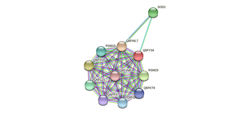 XP_444868.1 protein (Candida glabrata) - STRING interaction network