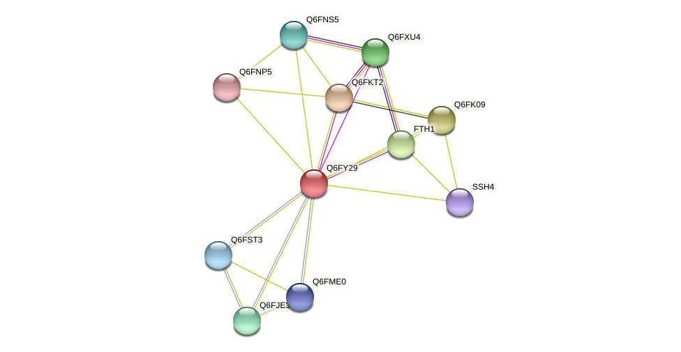 XP_444873.1 protein (Candida glabrata) - STRING interaction network