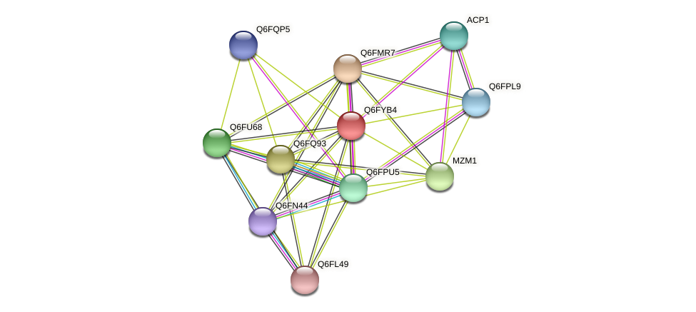 XP_444901.1 protein (Candida glabrata) - STRING interaction network