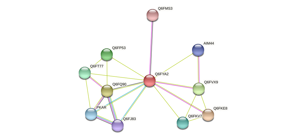 XP_444933.1 protein (Candida glabrata) - STRING interaction network