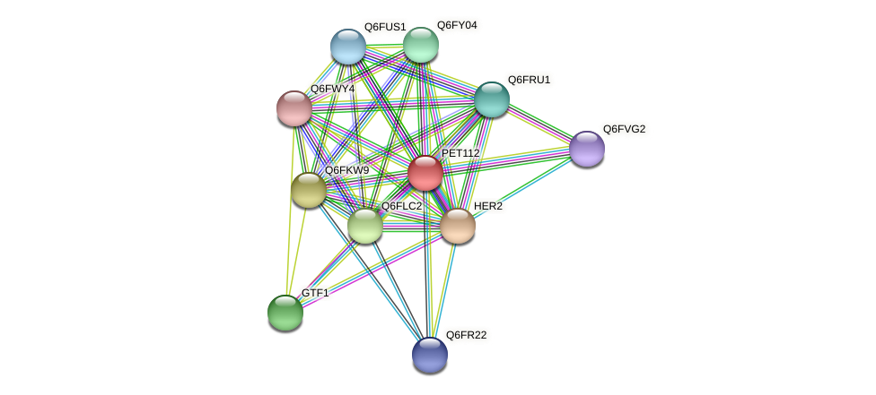 PET112 protein (Candida glabrata) - STRING interaction network