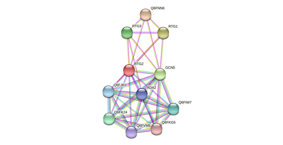 RTG2 protein (Candida glabrata) - STRING interaction network