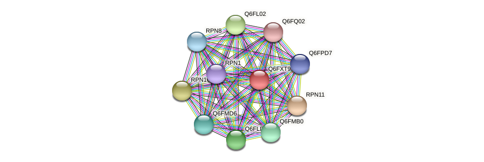 XP_444977.1 protein (Candida glabrata) - STRING interaction network