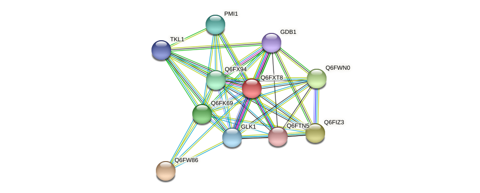 XP_444978.1 protein (Candida glabrata) - STRING interaction network