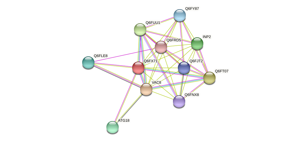 XP_444983.1 protein (Candida glabrata) - STRING interaction network