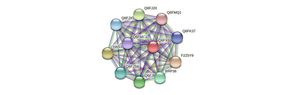 XP_444985.1 protein (Candida glabrata) - STRING interaction network