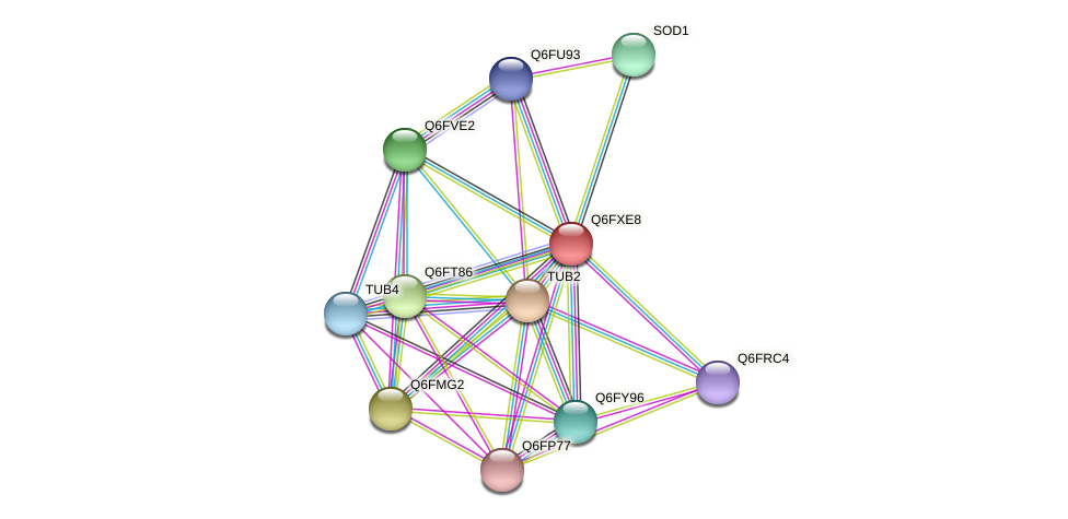 XP_445079.1 protein (Candida glabrata) - STRING interaction network