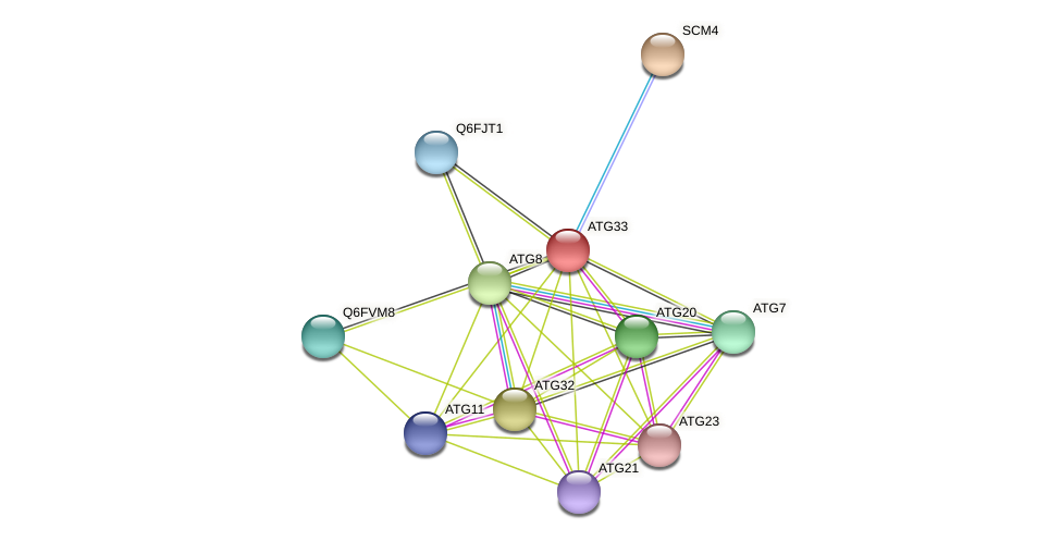 ATG33 protein (Candida glabrata) - STRING interaction network