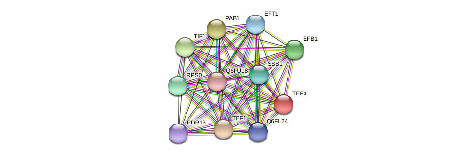 TEF3 protein (Candida glabrata) - STRING interaction network