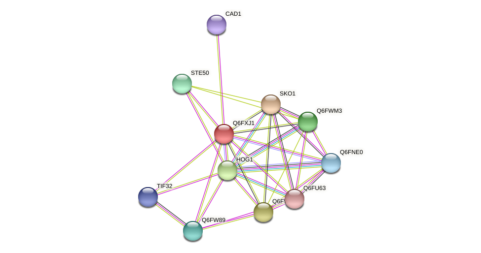 XP_445124.1 protein (Candida glabrata) - STRING interaction network