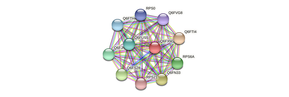 XP_445173.1 protein (Candida glabrata) - STRING interaction network