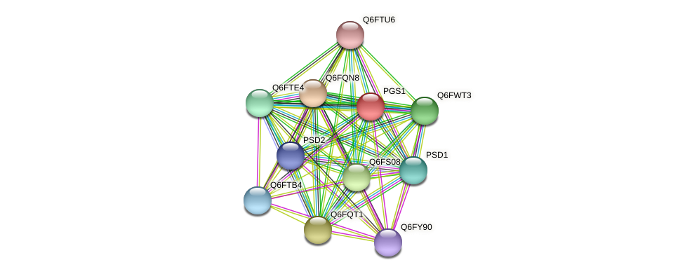 PGS1 protein (Candida glabrata) - STRING interaction network
