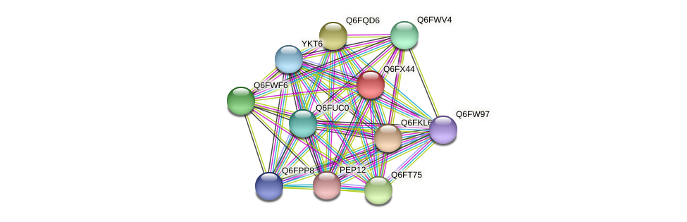 XP_445200.1 protein (Candida glabrata) - STRING interaction network