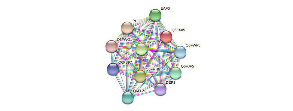XP_445239.1 protein (Candida glabrata) - STRING interaction network